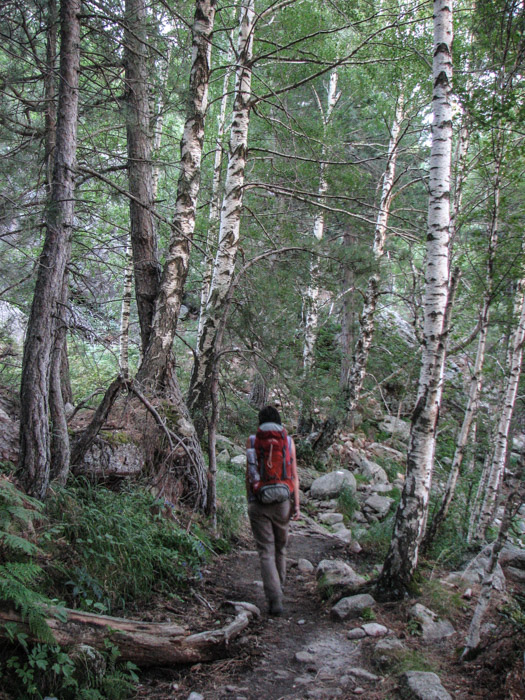 La adăpostul pădurii