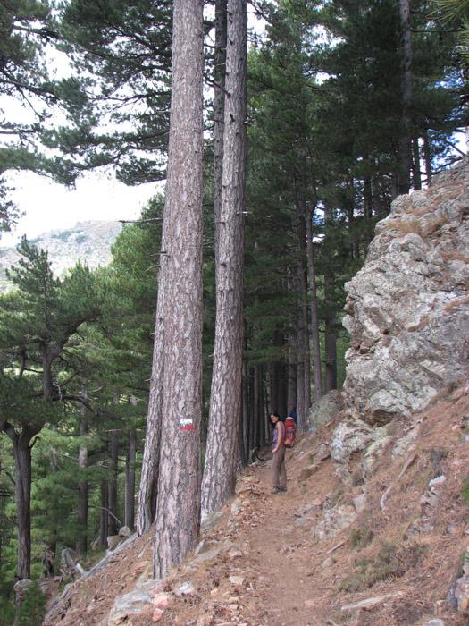 Printre pini