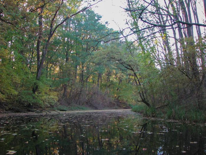 Pădurea