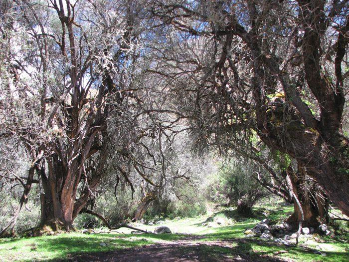 Pădurea încâlcită