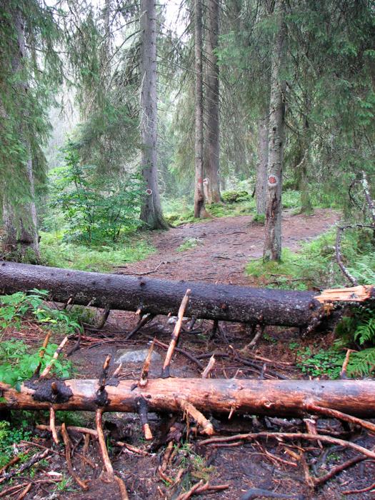 Adeseori poteca este blocată de arbori căzuți