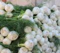 Finiche în piața din Castellammare