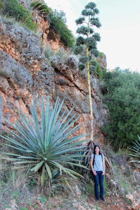 Floră mediteraneeană