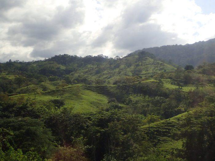 Verde de Chiapas